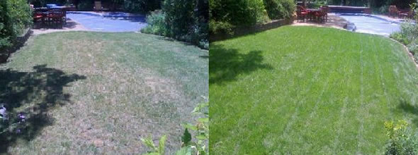 Organic Lawn Treatment Programs Clean